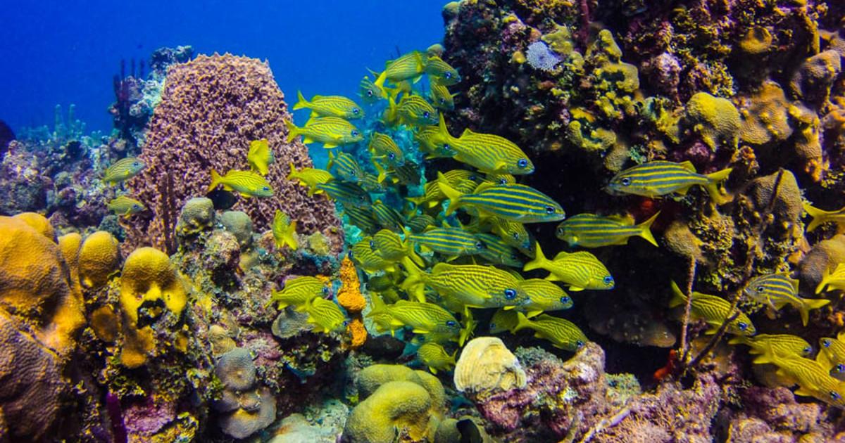 Отдых у берегов Карибского моря