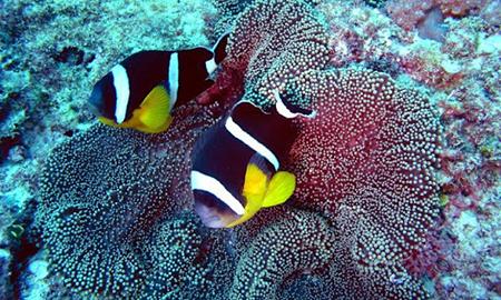 Дайвинг на острове Маврикий