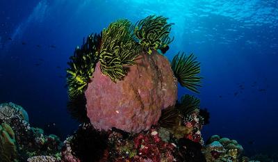 Дайвинг на острове Сулавеси