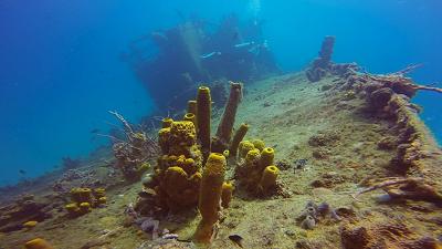 Дайвинг на Барбадосе