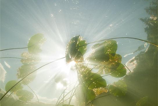 Дайвинг на озере Селигер